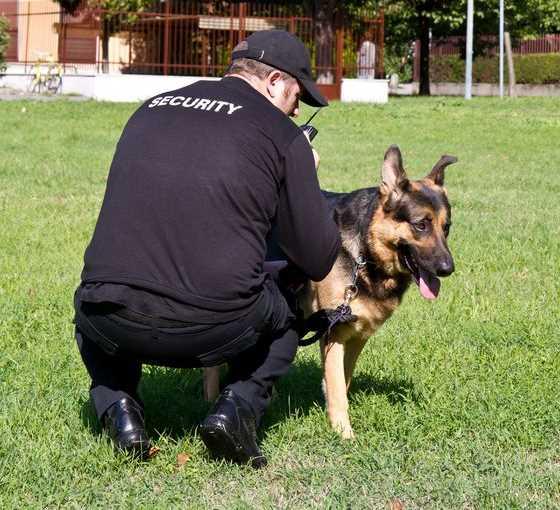 Security drug dog